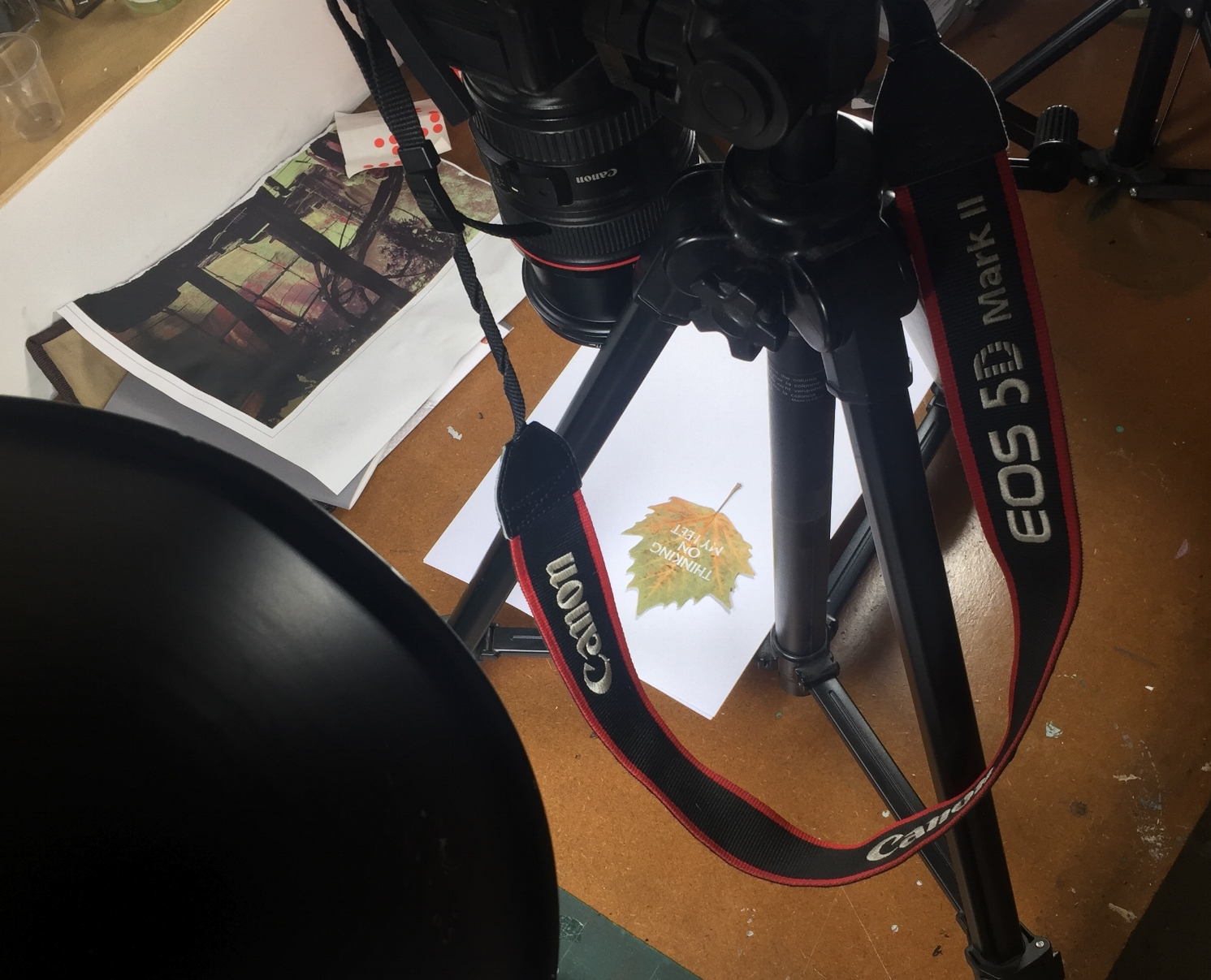 Shooting the leaf high res in the Sheddio…