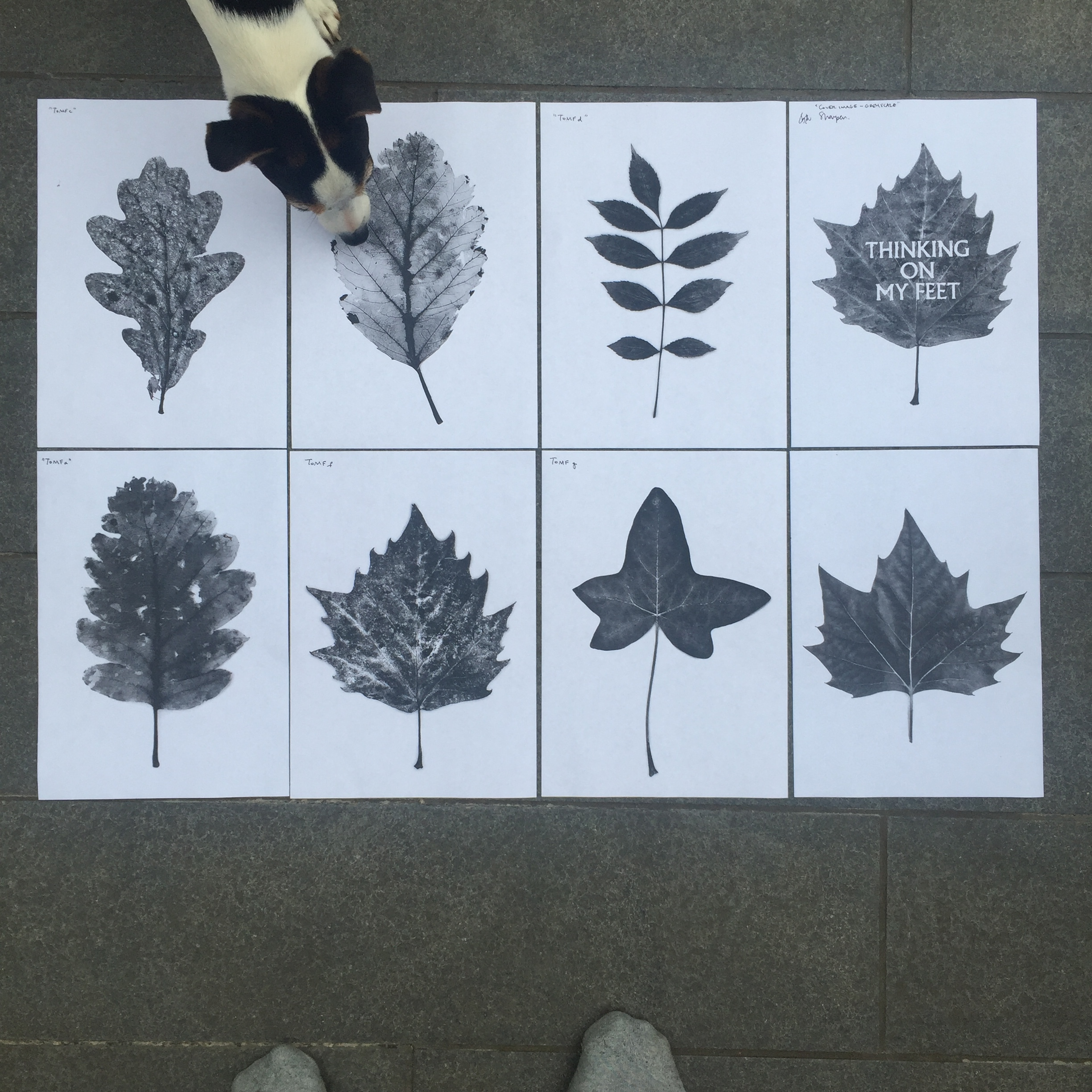 Chapter images (Poppy picks her 'final chapter' favourite leaf)