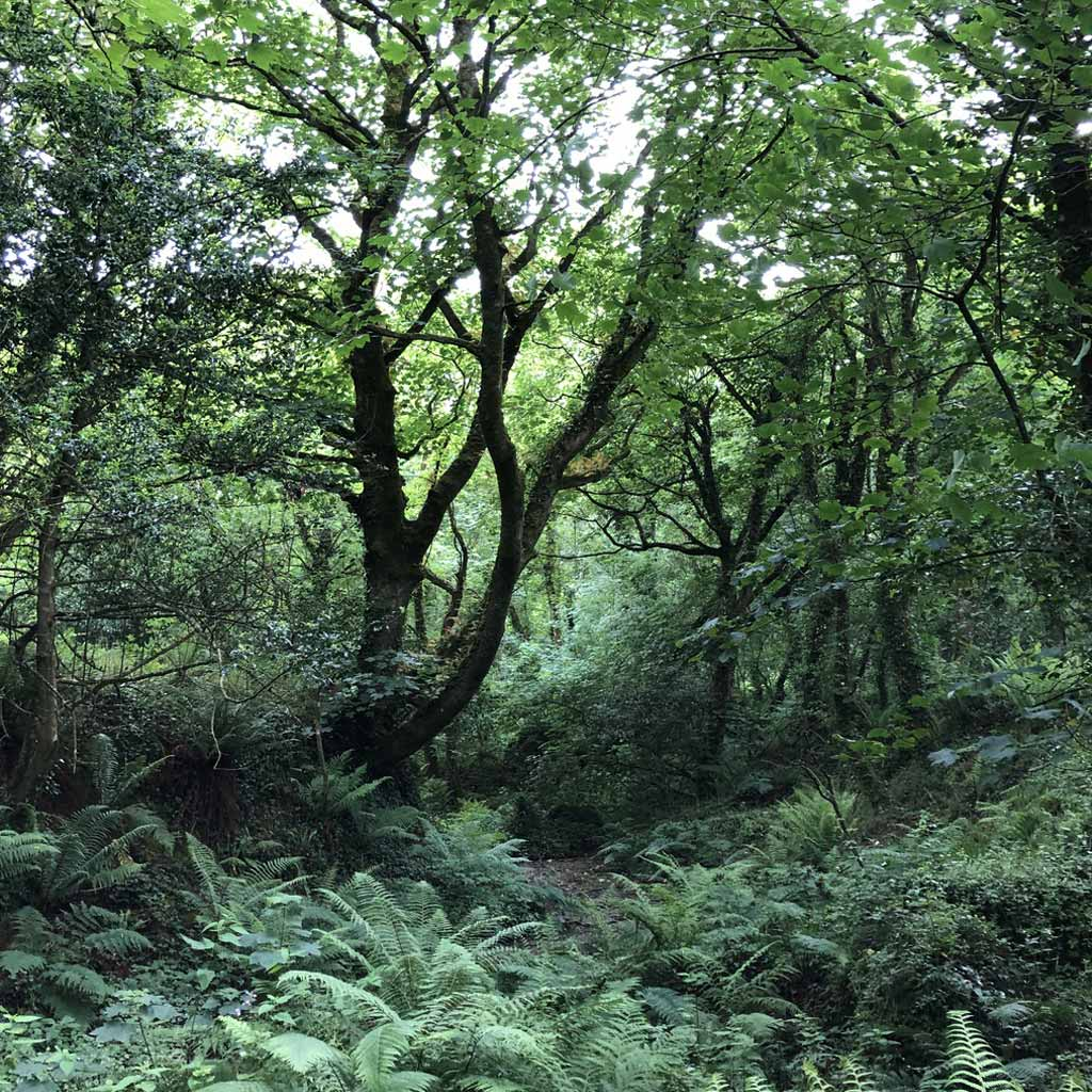 Lamorna Vale, an arcane forest that held me under its spell!