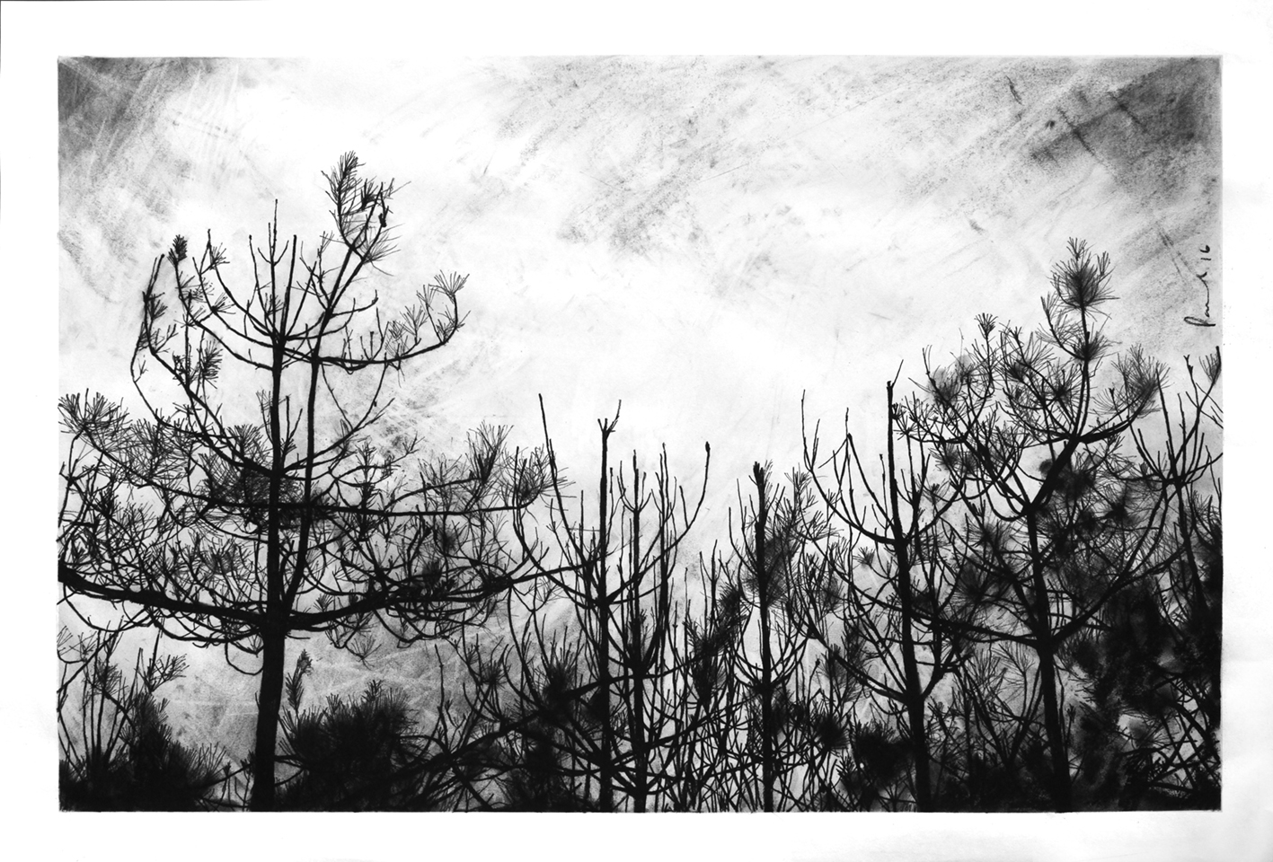 Wetland Boundary, Northumberland  2016 | 83 x 56.8cm Conte and charcoal Signed  SOLD