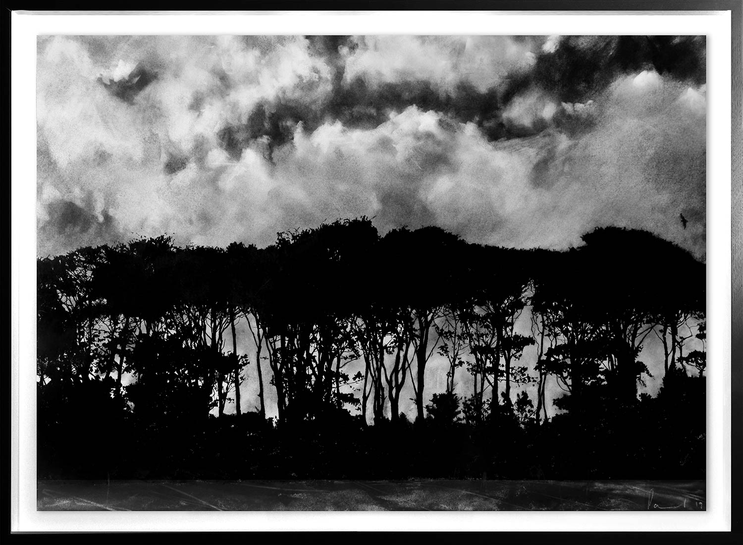 Tree Line  2019 | 84 x 60cm Conte and charcoal Signed   BUY PRINT