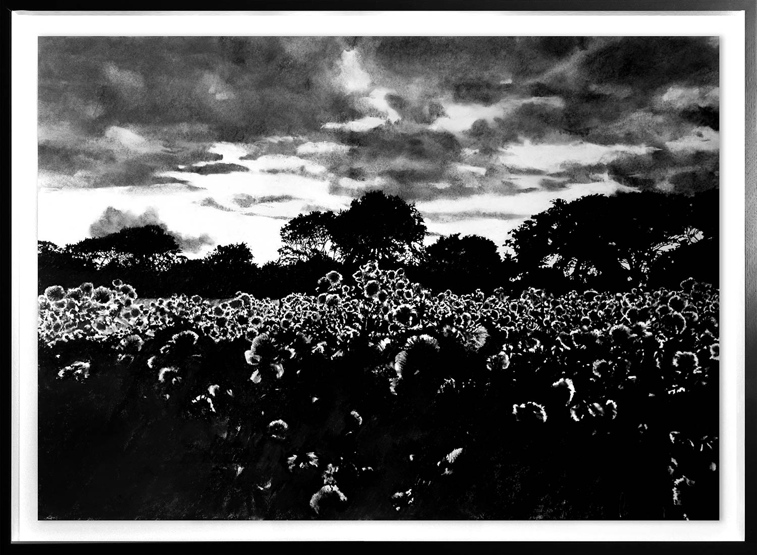 Thistle Field  2019 | 84 x 60cm Conte and charcoal Signed   BUY PRINT