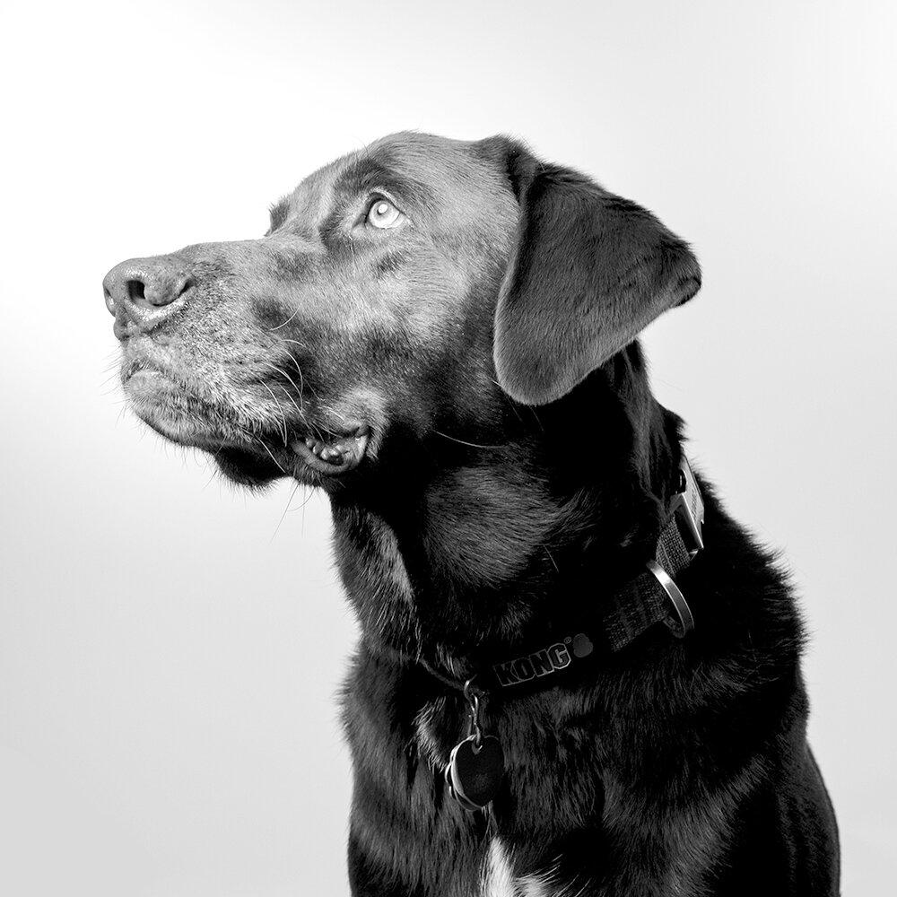 Milton  / Office Dog