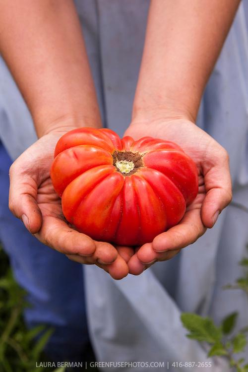Tomato-LB1109-8428.jpg