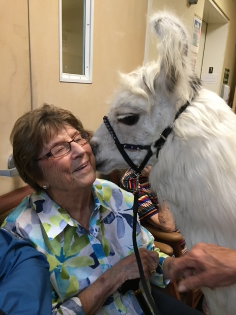 Bettye Blue Getting Kissed by a llama!