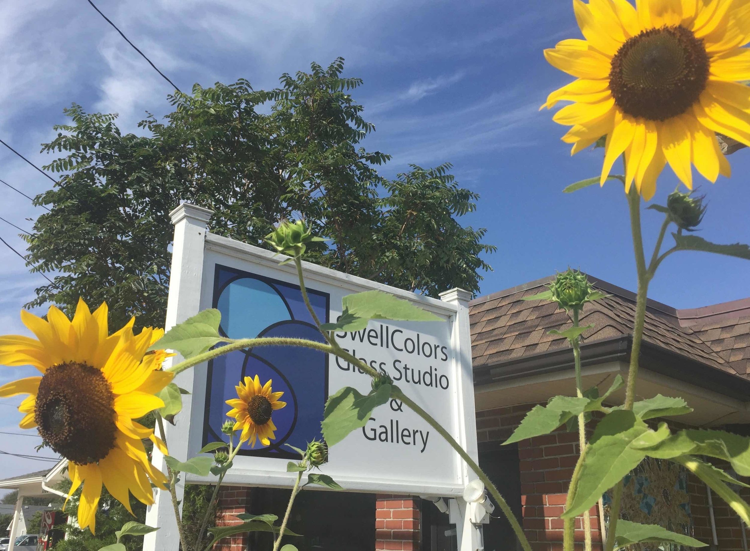 It's sunflower season at SwellColors! Pick up a free heirloom seedling at SwellColors in Surf City this Memorial Day Weekend! :-)