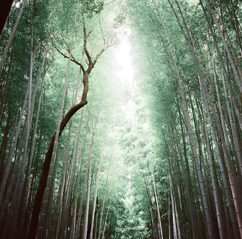 Japan Rollei-9.jpg