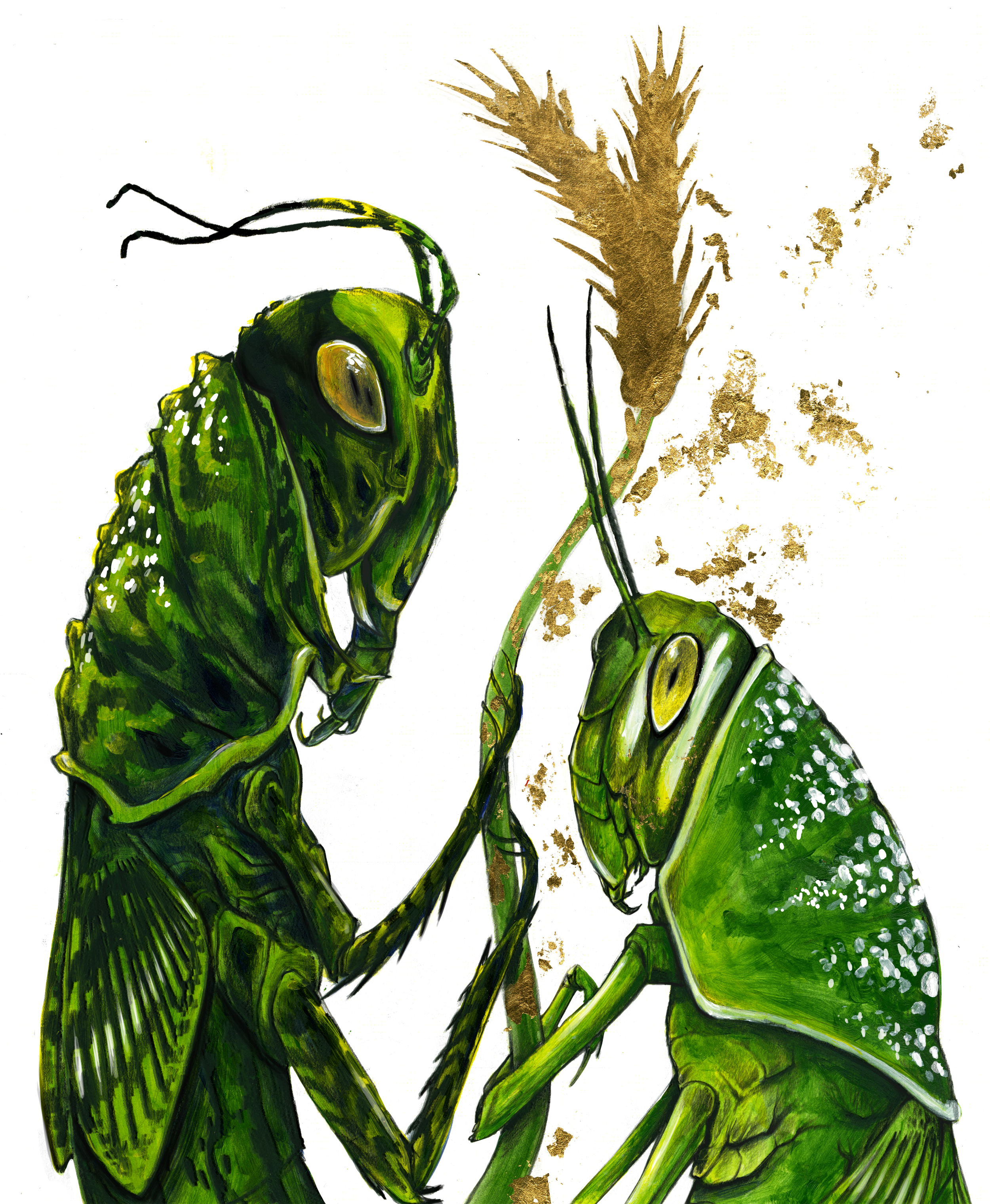 When Grasshoppers Go Biblical: Serotonin Causes Locus to Swarm- Scientific American