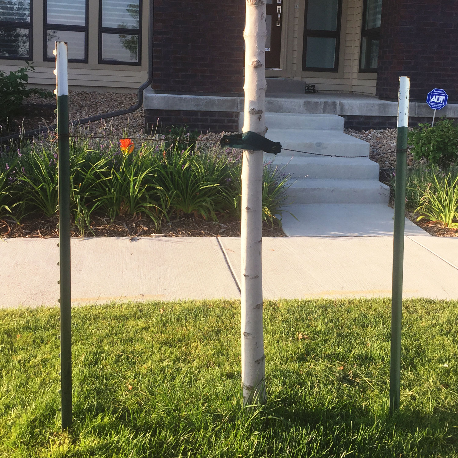 post-painted-tree-stake-out-3.jpg