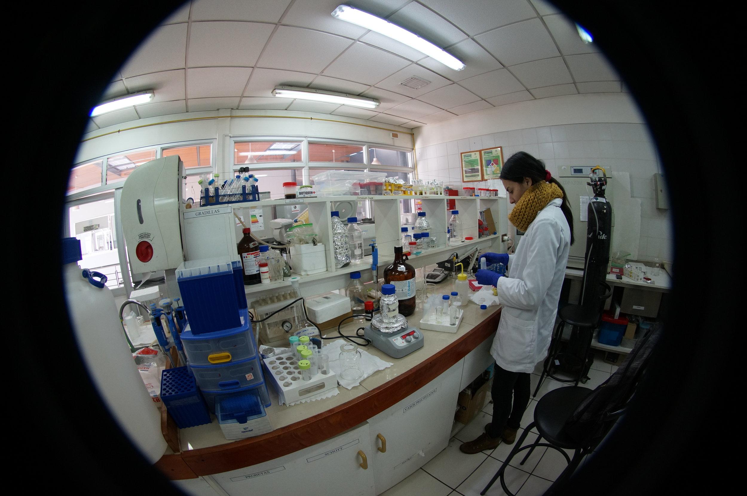 BIOREN LAB microalgas testing for biodiesel.JPG