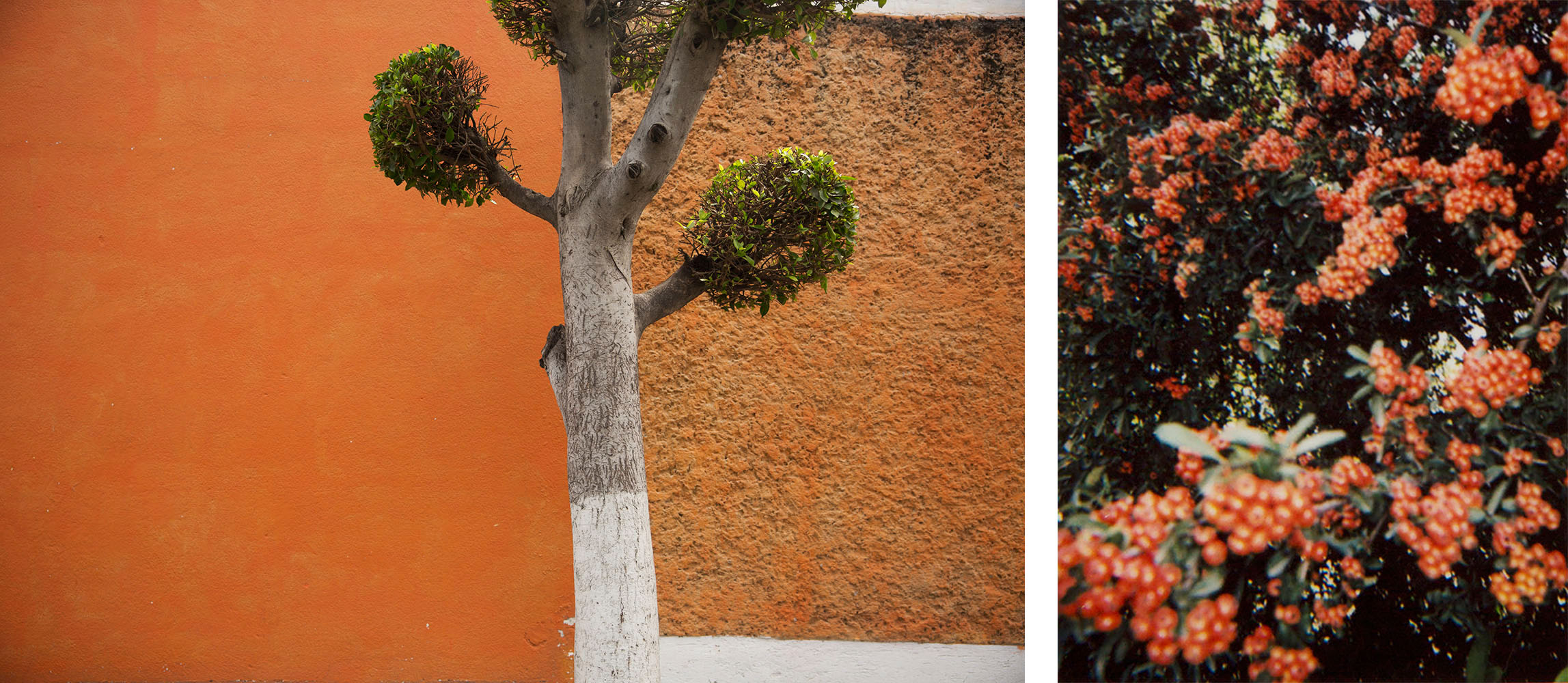 combo orange.jpg