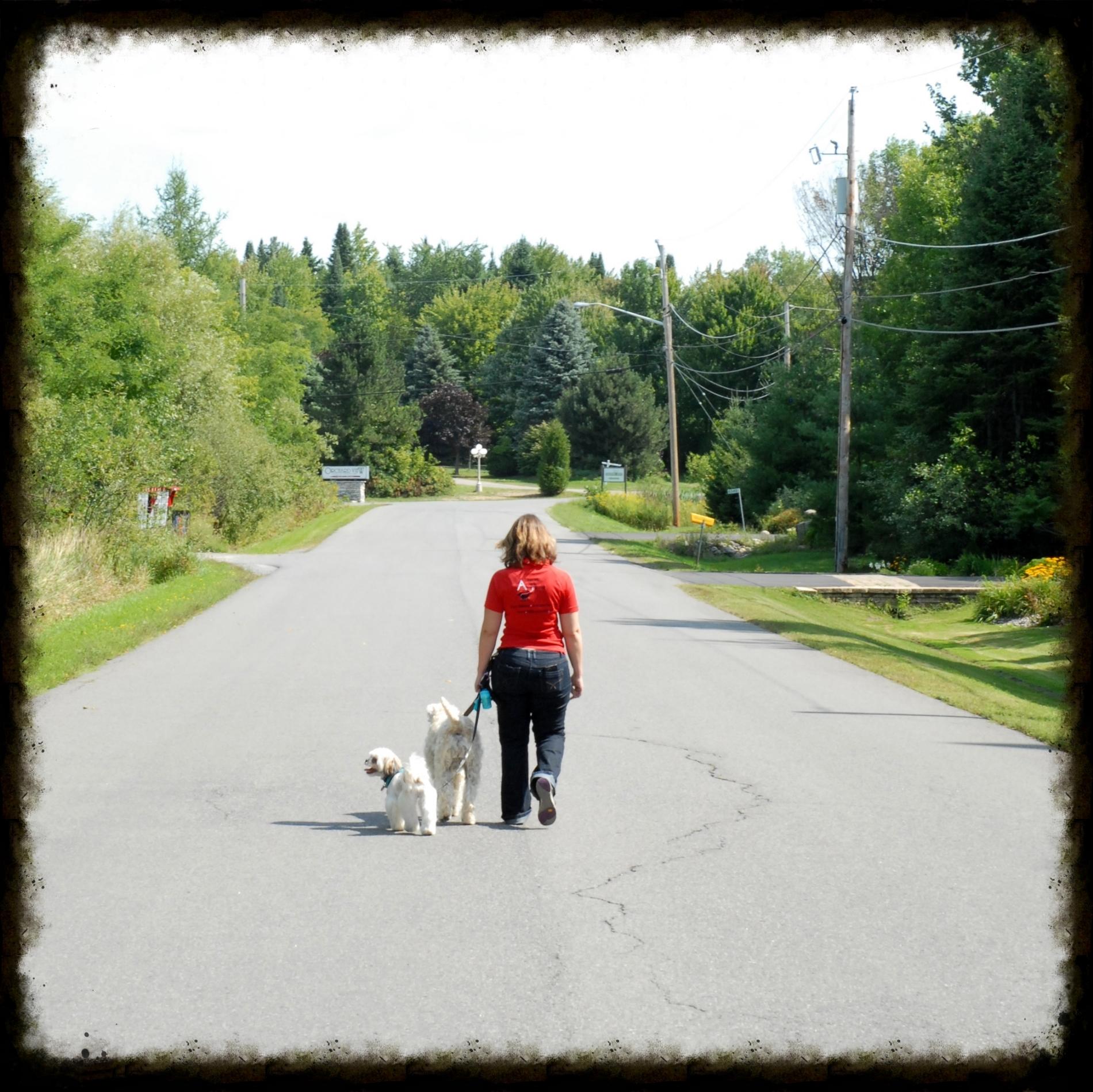 On Leash walk