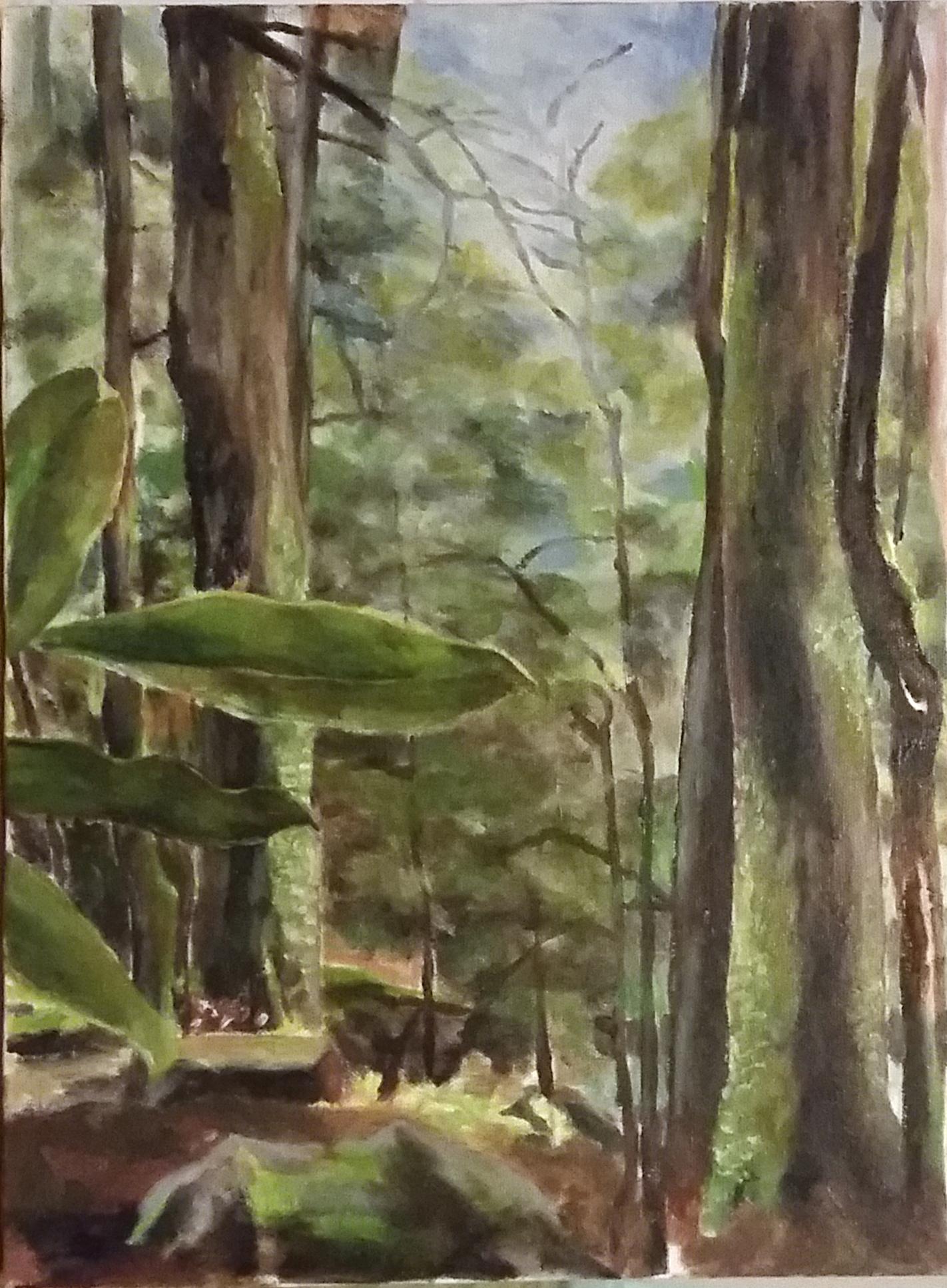 Joyce Kilmer Forest.jpg