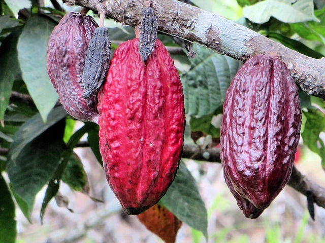 Chocolate under threat? - Global TV explores the environmental threats putting a strain on chocolate plantations worldwide.