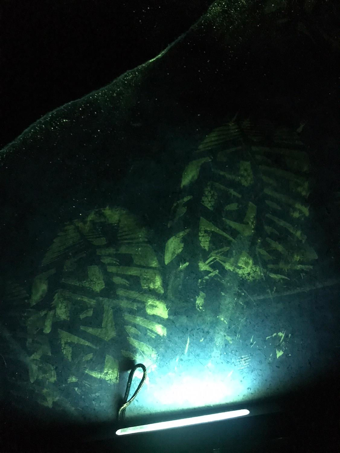 Bloody footprints imaged using Sciluminate powder. Image provided by Latent Forensics.