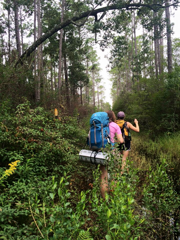 Apalachicola National Forest △ Florida National Scenic Trail