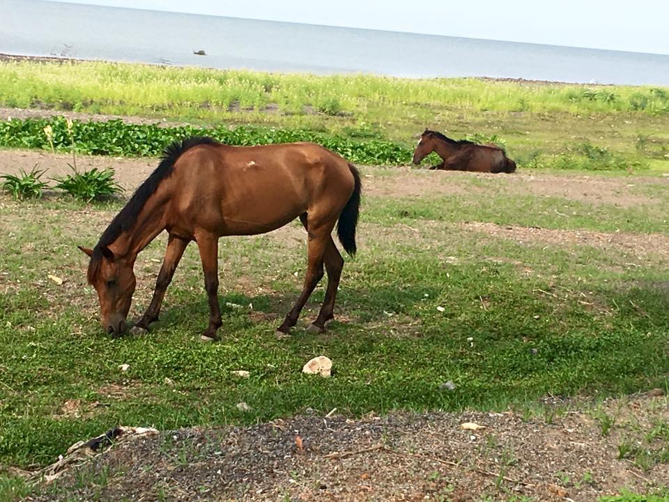 Horses at Lake Nicaragua, Granada, Nicaragua