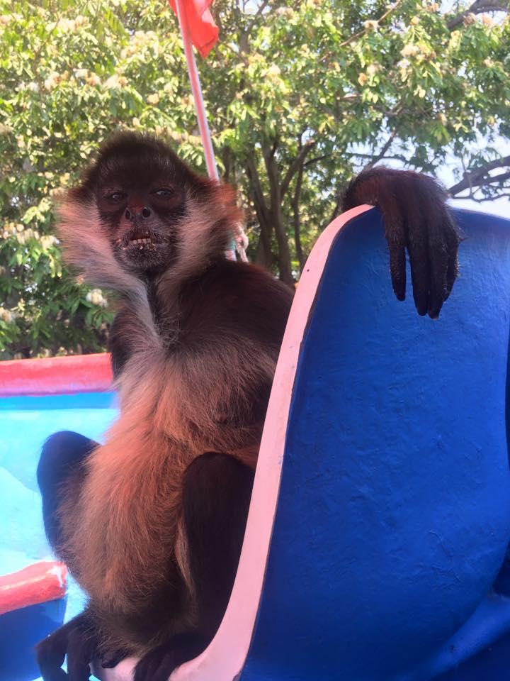 Monkey, Las Isletas Tour, Granada, Nicaragua