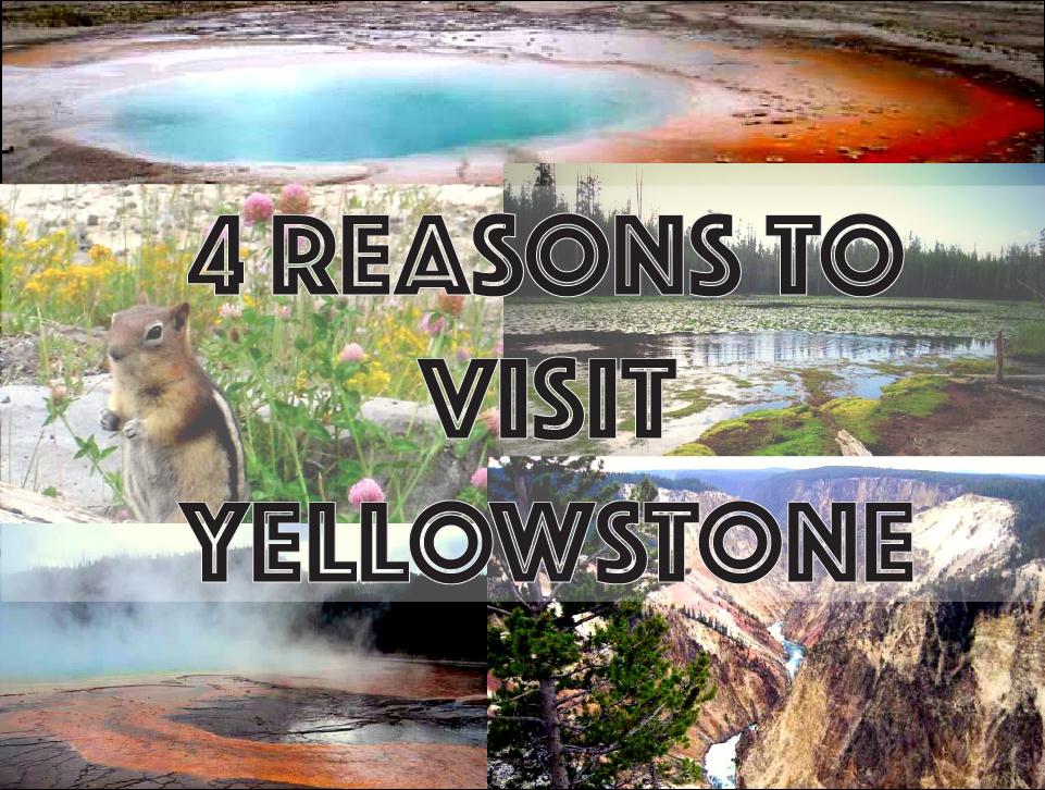4 Reasons to Visit Yellowstone National Park