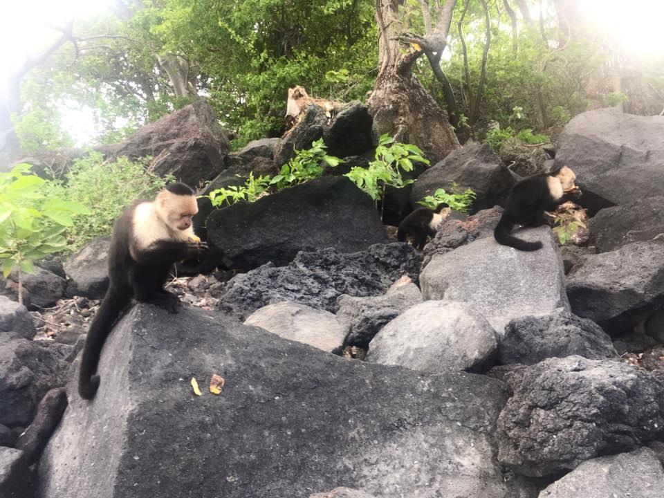 Monley Island, Ometepe