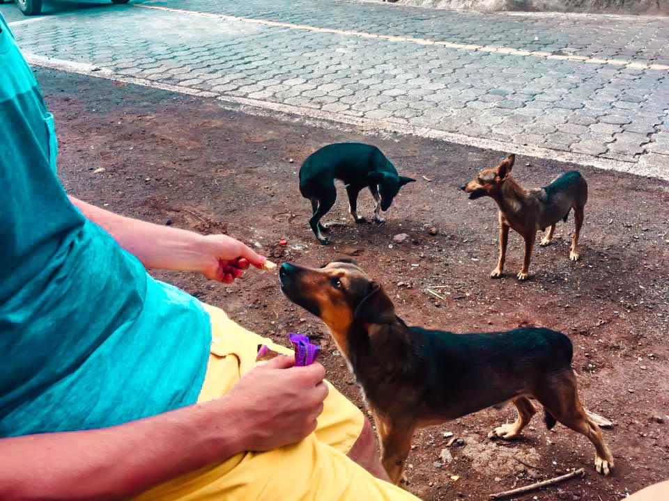 dogs on Ometepe Island, Nicaragua