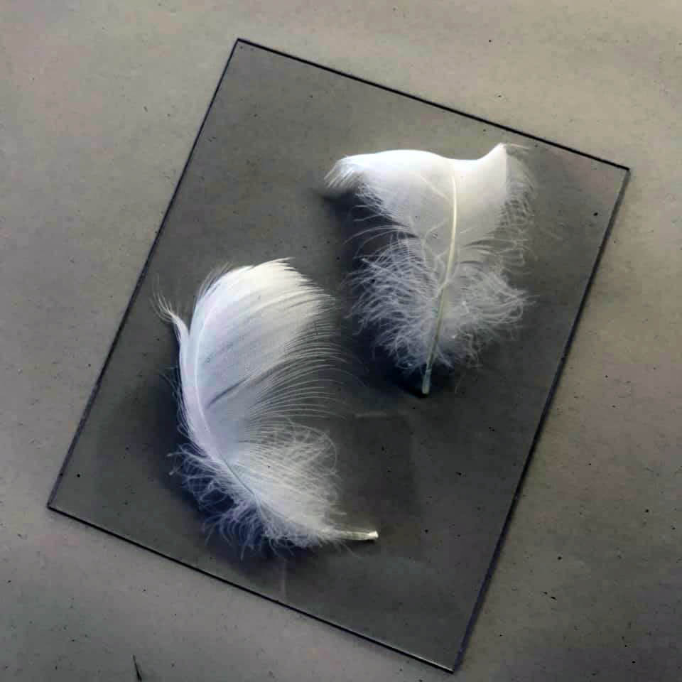 Feather plate before printing