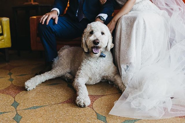 Bring your dog to (my) work day... love incorporating your fur babies into your wedding day portraits! . . . . . #photography #affobpresets #asseenincolumbus #aperture #aperturephotography #dogsofinstagram #wedding #bride #groom #weddingdog #dog #strongwater #strongwaterwedding #strongwatercolumbus