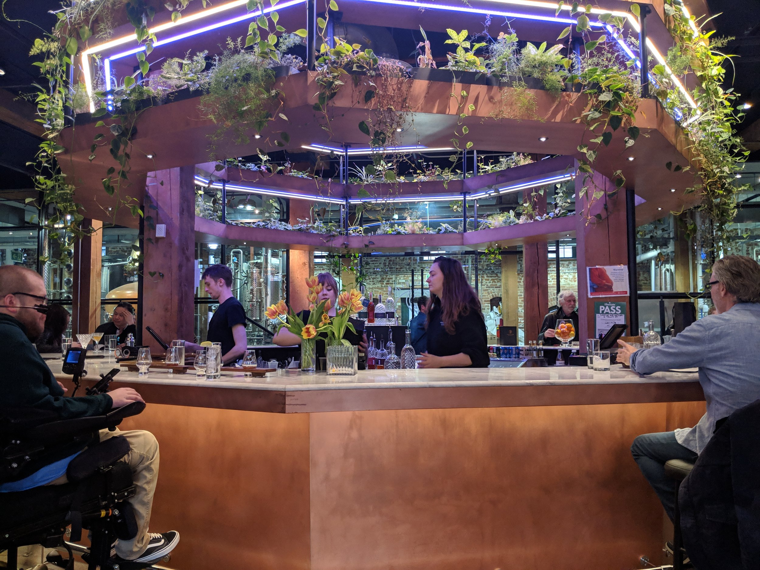 Picture of plants and lights over bar at the Spirit of York