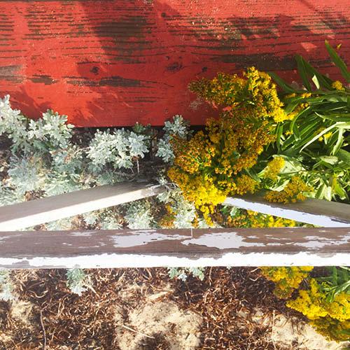 Sarah_Scales_Design_Studio_Travels_Nantucket_ Cape_and_Islands _12.jpg