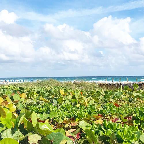 Sarah_Scales_Design_Studio_Travels_Palm_Beach_West_Palm_Florida_.jpg