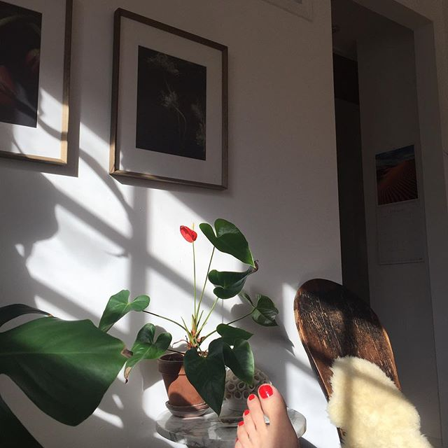 Saturday morning with my feet on the coffee table while drinking earl grey tea... and then I looked over and realized my toes were having a real color moment with the plant. #selfcareiseverywhere