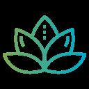 lotus-flower.png