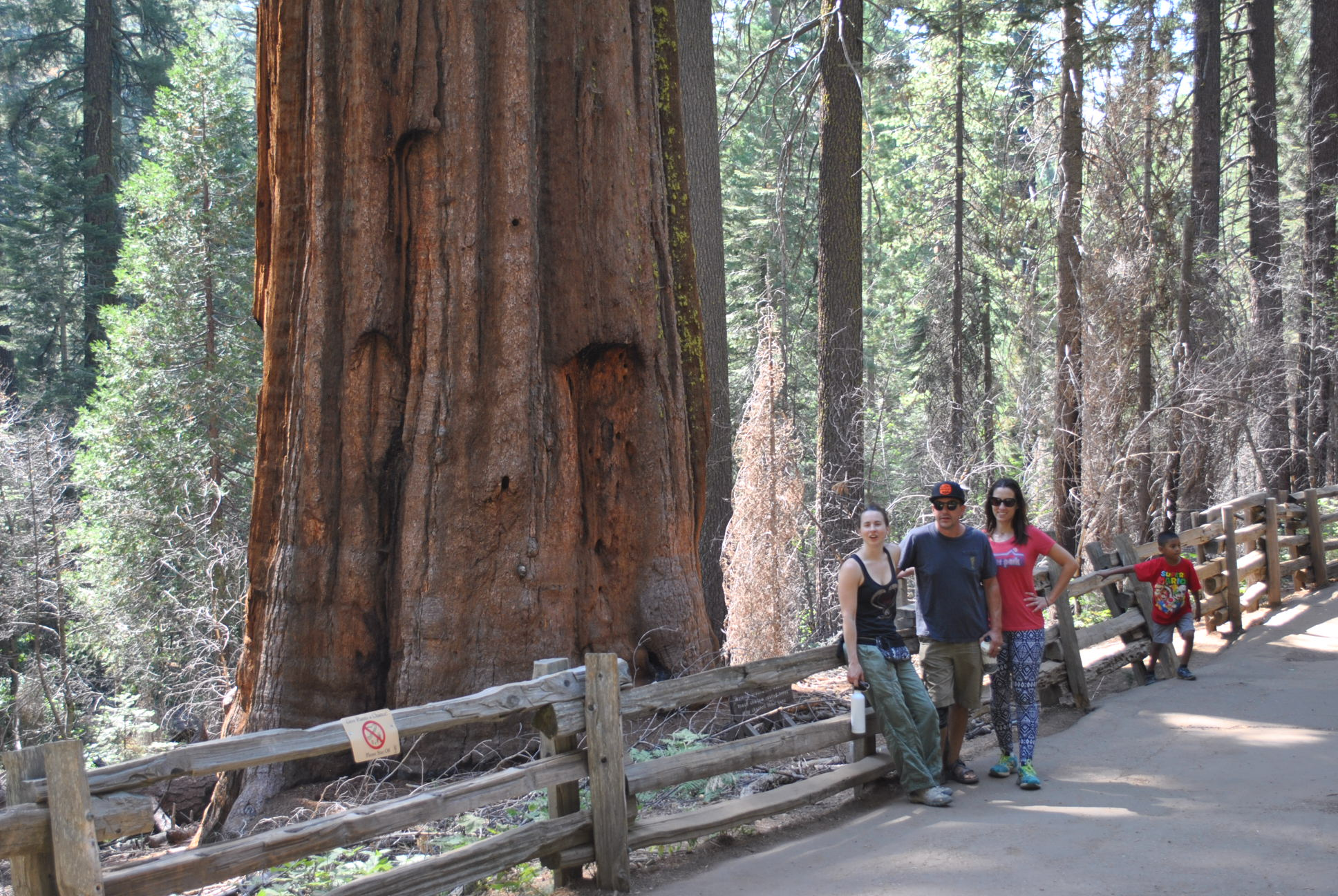 The call this giant sequoia Big Red. Im like, I've seen bigger and redder. nice try though.
