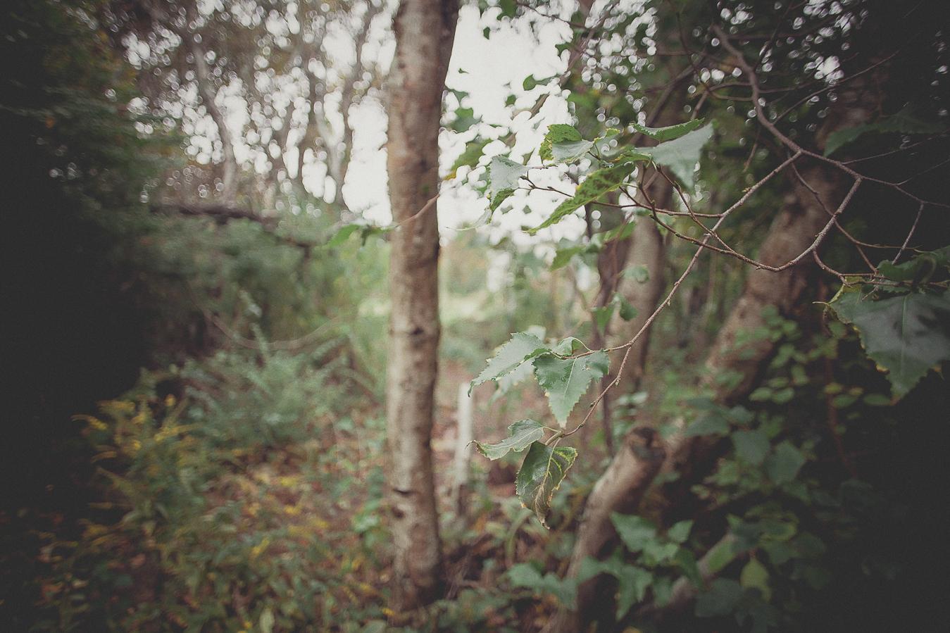 NinaLilyPhoto_Gaddi_Blog001.jpg