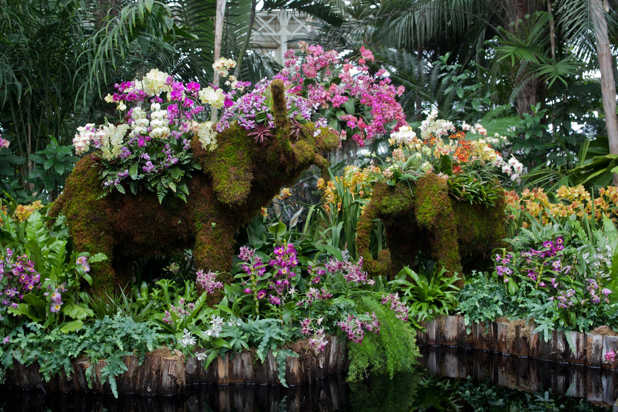 ChristopherPostlewaite_orchidshow2017_015.jpg