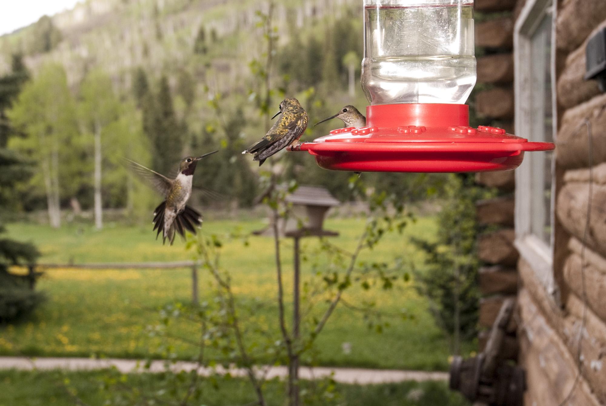 Chair_Mountain_Ranch_BOA6113-Edit.jpg