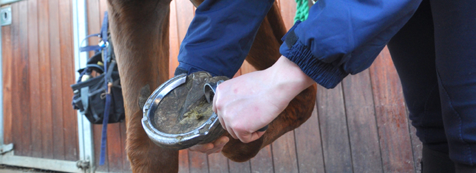 FE_Horse-Care-and-Management_005-1.jpg
