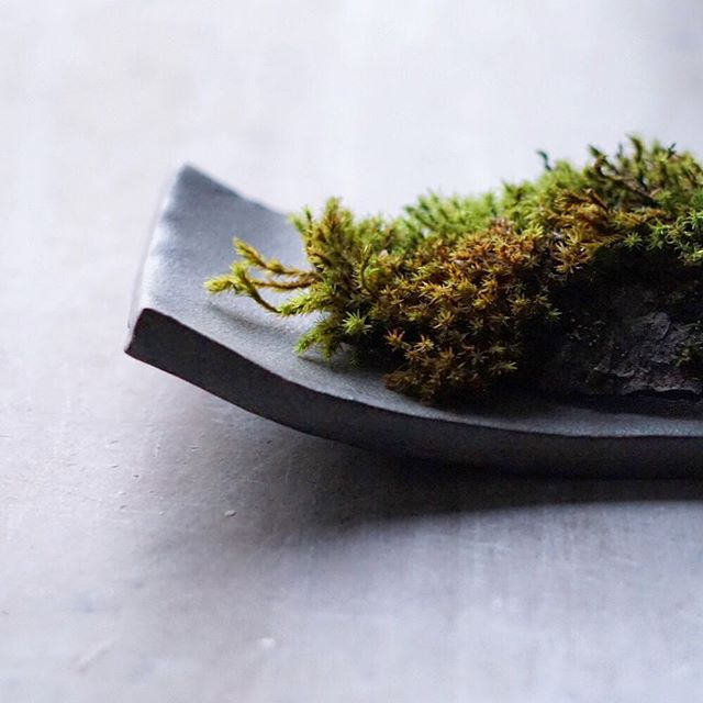 Dai with sphagnum moss.
