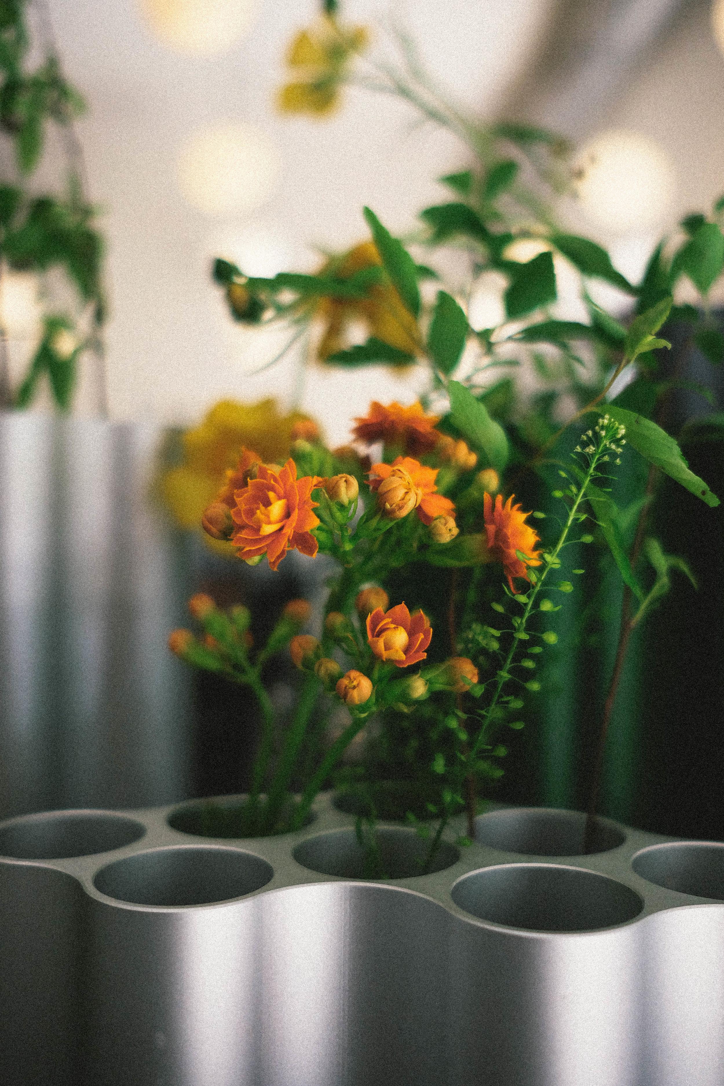 Ronan & Erwan Bouroullec Nuage Vase ( Vitra )