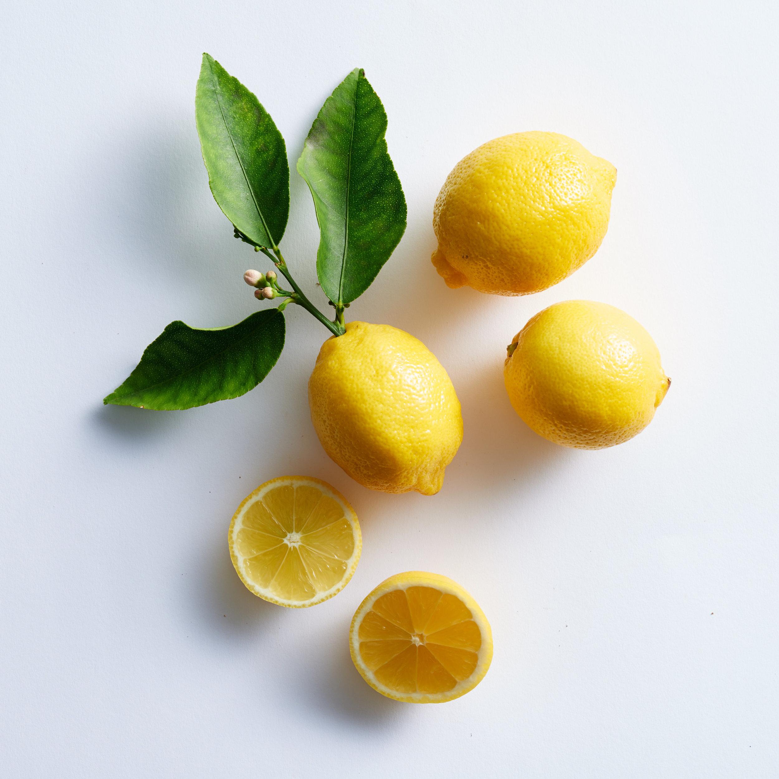 PT20160823_BlueDinosaur_Lemon_39.jpg
