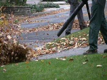 cleanup-leaf-blower.jpg