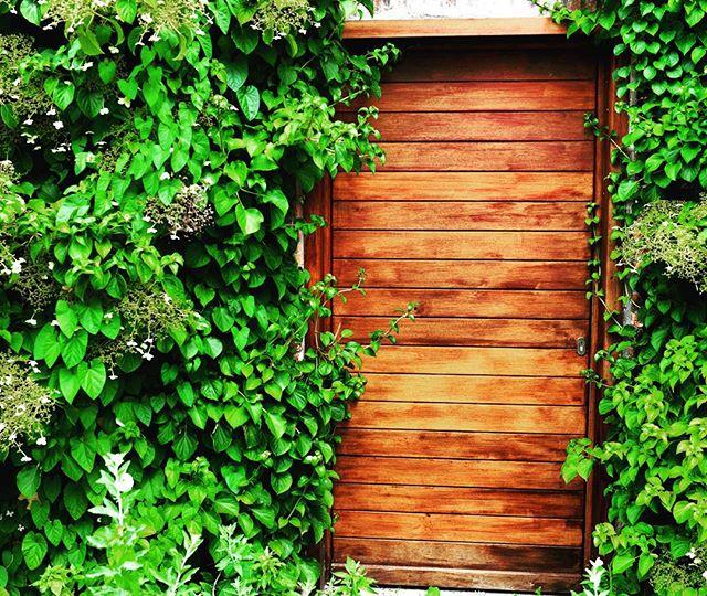 Secret Garden :: Door of Unknown #secretgarden #nature #🌳#unknown #jungle #fern #takeawalk #deep #naturephotography #🚪 #Belgium #door #hugatree #travel #nikon #nikonpros #d610 #wild #grow #goldeneyephotography #vscophile #photooftheday #vsco #instadaily #instagood #justgoshoot