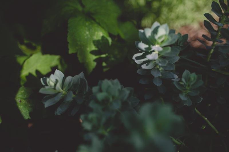 garden flowers shadows
