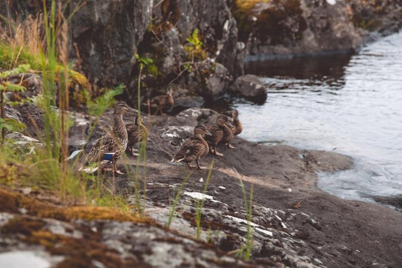 Finland lake Näsijärvi Tampere
