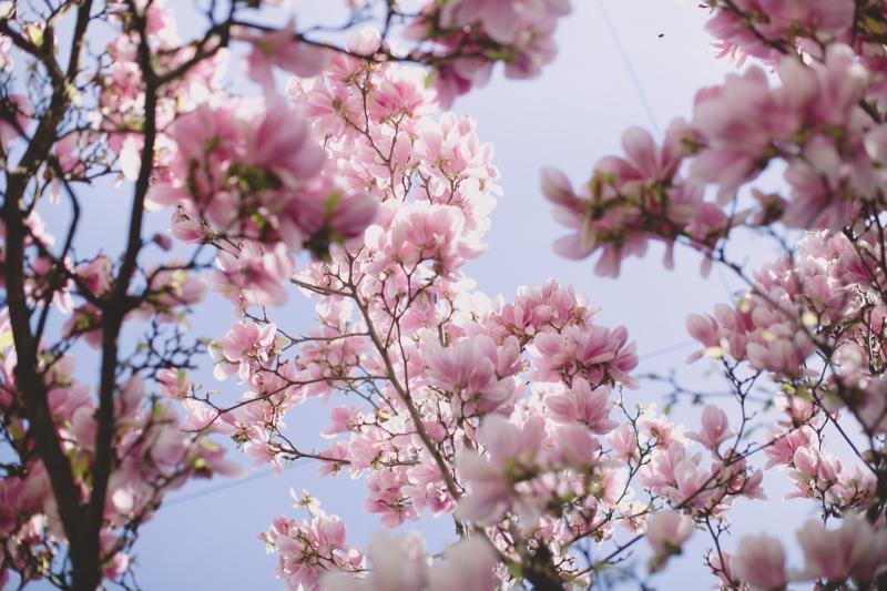 Martina Margarete Berger Fotografie Kärnten Österreich Magnolia spring flowers