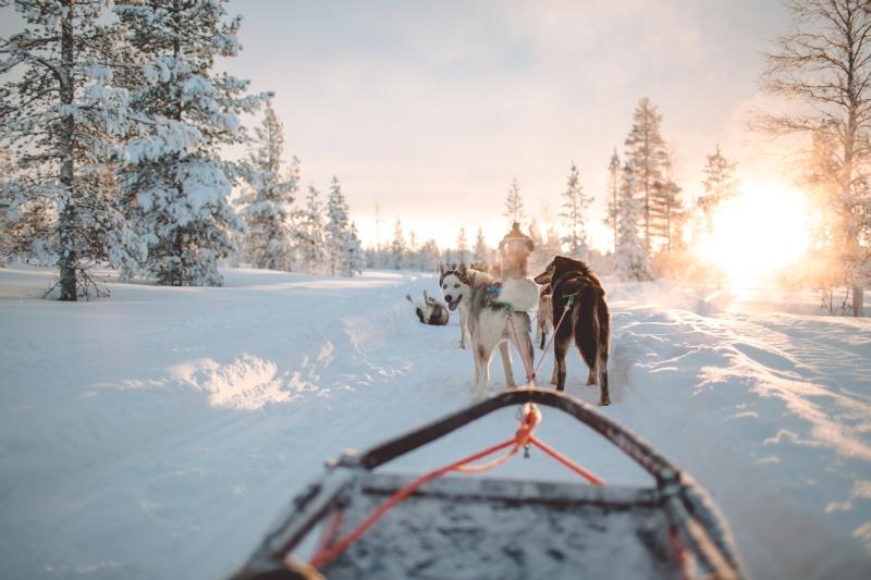 Husky&Co Saariselkä Lapland Husky Safari Kakslauttanen Artic Resort huskies