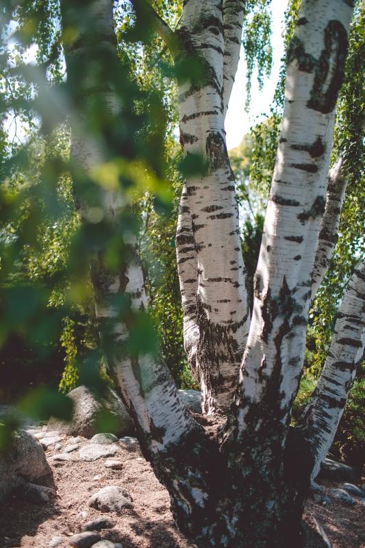 Tampere Visit Tampere Hatanpää Arboretum Martina Margarete Berger Finland Suomi Tampere in Autumn