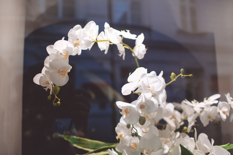 Orchideen Wien