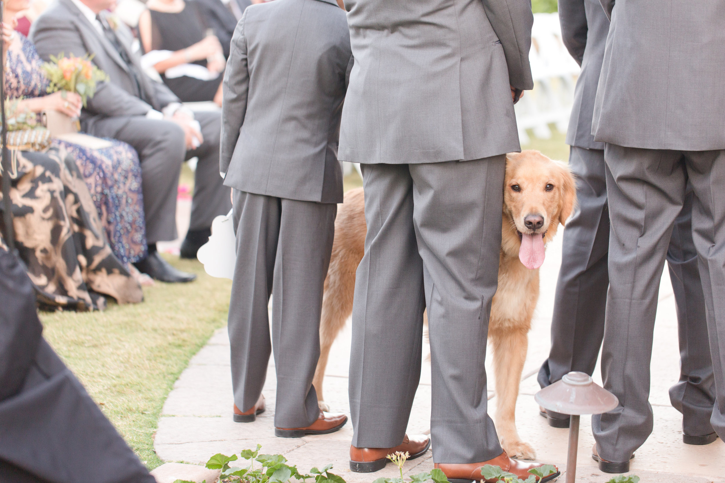 Phoenix-Scottsdale-Arizona-Wedding-Planner-Wedding-Venue-Destination-Wedding-Planner, Omni Montelucia weddings, sunset weddings, Arizona Sunset weddings, wedding details, bridal party, groomsmen, bridal party dog, wedding dog, ring bearer dog