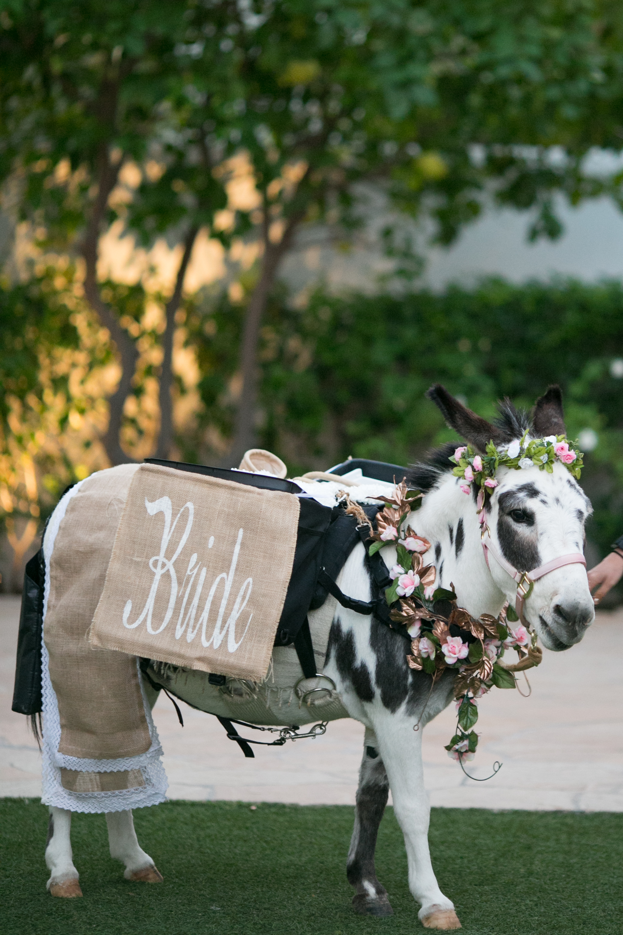 arizona wedding desert wedding el chorro wedding planner beer burro